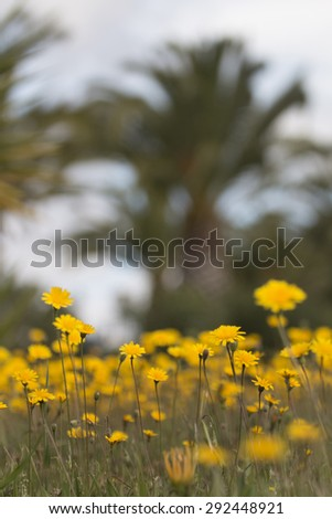 Close up view of beautiful spring dandelion flowers. - stock photo