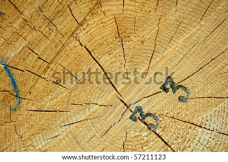 Close-up view of cut tree showing development of the wood structure. There is number 33 burnt into the wood. - stock photo