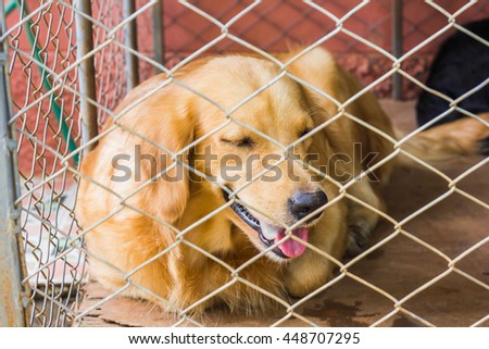 Close up view of dog behind the cage