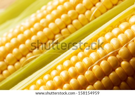 Close up view of fresh corn cobs - stock photo