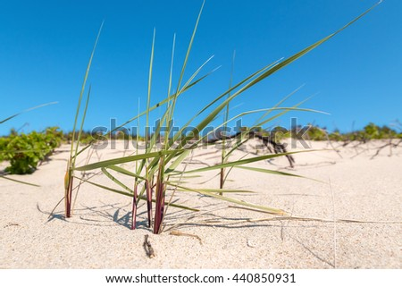 Close-up view of green grass on the sandy beach - stock photo
