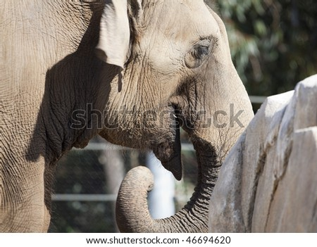 Close up view of huge elephant staying near rock - stock photo
