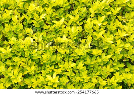 Close-up View of Leafy Foliage - stock photo