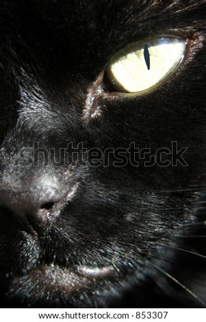 Close up view of my Cat (Zombie). Included a clipping path for the eye, so you can easily change the colour of the eye. This is actually the real colour. - stock photo
