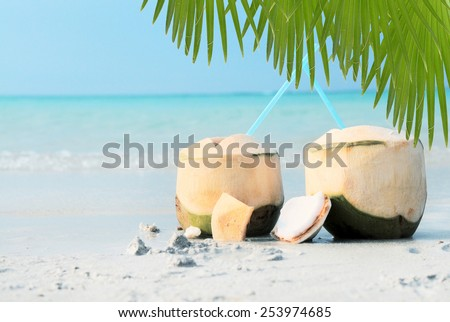 Close up view of nice fresh coconut in tropical environment - stock photo