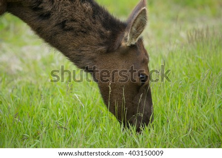 close up view of reindeer