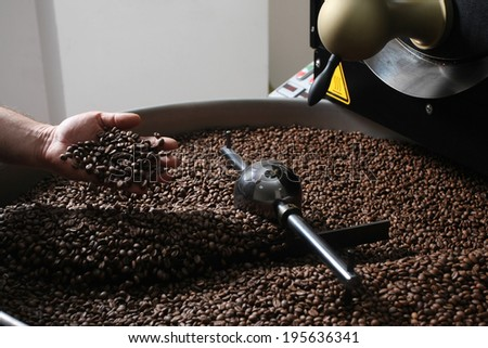 close-up view of roasted coffee beans in male hand - stock photo