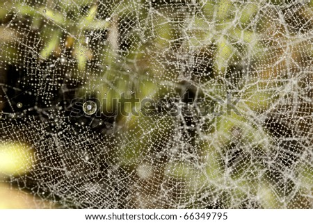 Close up view of some droplets of water on a spider web. - stock photo