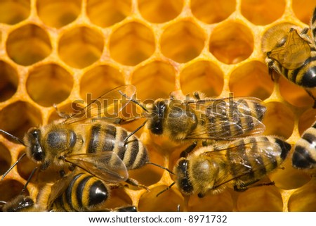 Close up view of the bees on honey