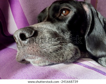 Close up view of the nose of a dog - stock photo