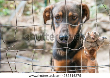 Close up view of the of a stray dog's paw behind the corral of a dog refuge - stock photo