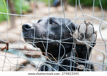 Close up view of the paw of a stray dog behind the corral of a dog refuge - stock photo