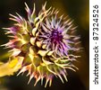 Close up view of the pink and purple thistle flower - stock photo