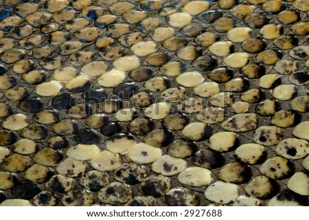 Close-up view of the scales on the skin of a southern African python (Python natalensis)  - stock photo