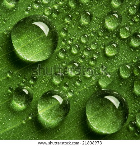 Close up view of the water drops background - stock photo