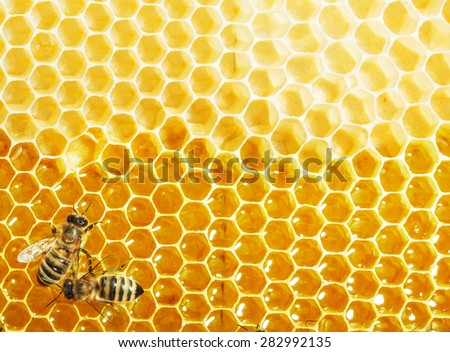 Close up view of the working bees on honey cells - stock photo