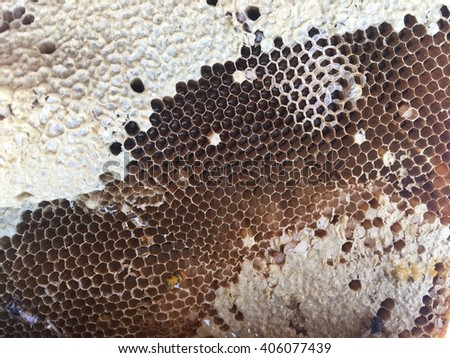 Close up view of the working bees on honey cells./ Honeycomb with bees and honey