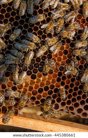 Close up view of the working bees on honeycomb. The collected pollen is placed in the honeycomb by the bees. Pollen is a food for young bees. Pollen used in alternative medicine. - stock photo