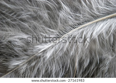 close up view of white feather - stock photo