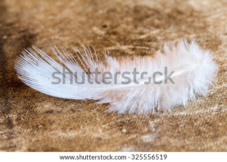 Close up view of white fluffy feather - stock photo