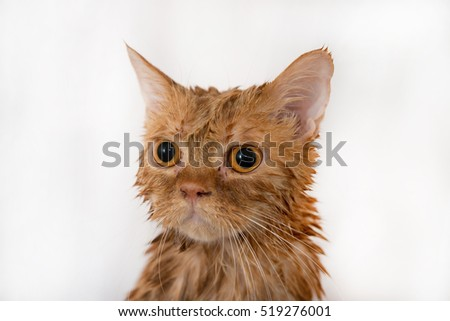 Cat Crying And Lying In The Litter Box