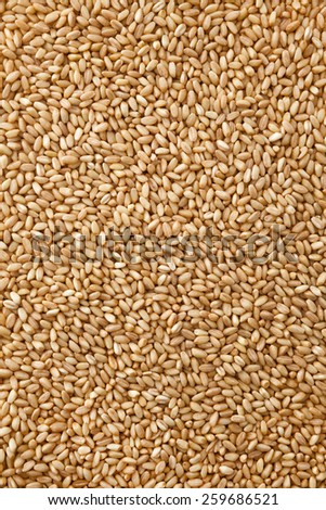 Close up , Wheat pile background , full frame - stock photo