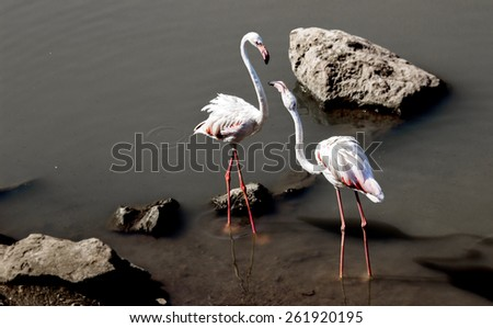 close up white crane in pond at zoo - stock photo