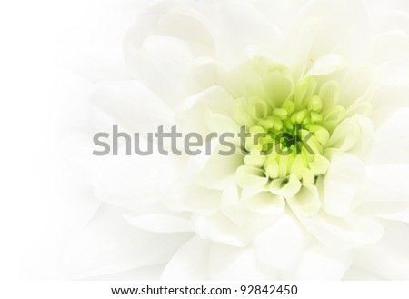 Close-up white daisy flower background. - stock photo