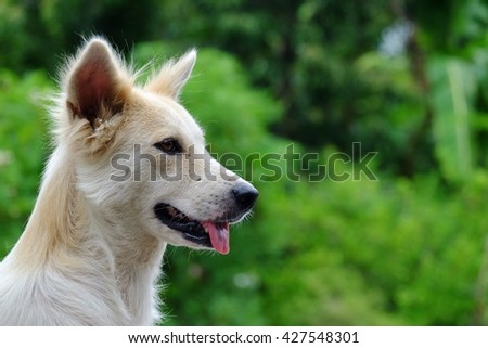 Close up white dog with nature background
