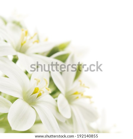 Close-up white flowers background isolated on white