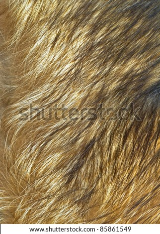 Close up wolf fur texture to background - stock photo