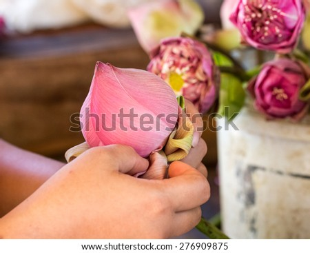 close up woman folding petal pink lotus for pray Buddha in thai culture