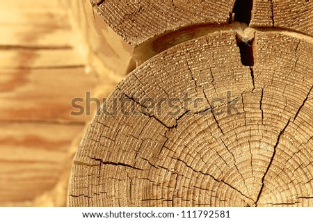 close-up wooden cut - stock photo