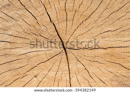 close-up wooden cut texture - stock photo