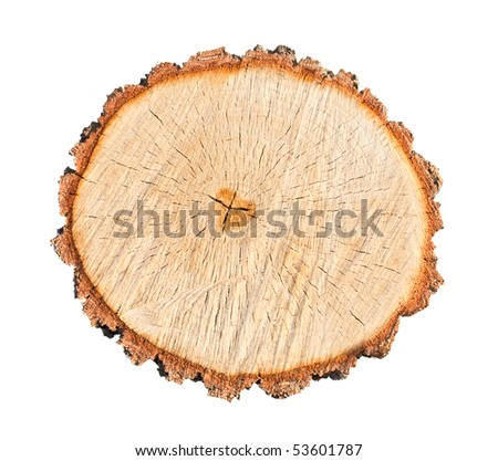 close-up wooden cut texture isolated on white - stock photo