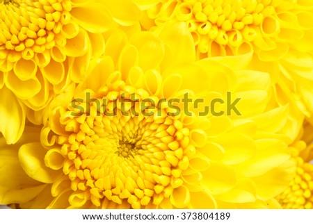 Close-up Yellow flower. - stock photo