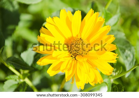 Close up yellow flower in green garden