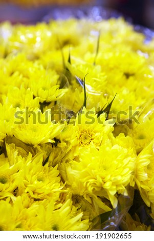 close up yellow flower in market - stock photo