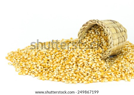 Close up yellow grain corn isolated on white background