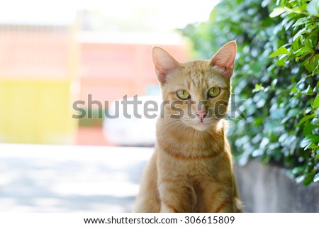 close up yellow homeless cat on street (background) - stock photo