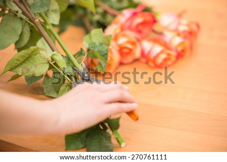 Close-up. Young female florist cutting a roses with secateur at flower shop. - stock photo