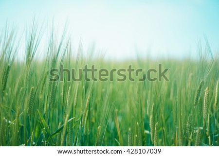 Close up young green rice field with blue sky