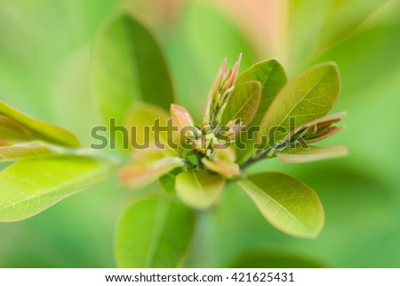Close up young leaves green nature background  - stock photo