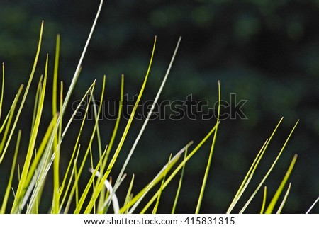 close up young leaves of grass