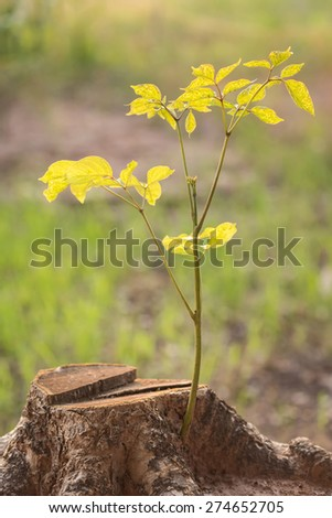 Close up young plant growing on old tree stump - stock photo
