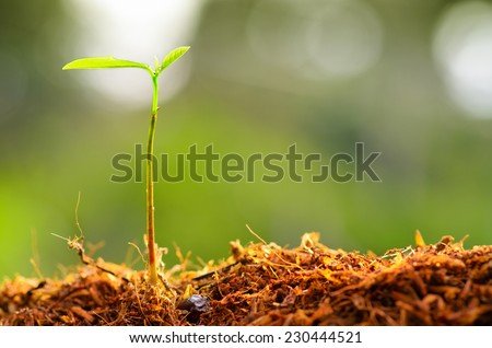 Close up Young plant growing over green environment - stock photo