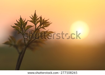 Close up young plant with sunset background - stock photo