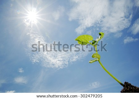 Close up Young seedling growing on black fertile soil with dew from raining on under blue sky white cloud against the sun light. Earth day concept - stock photo