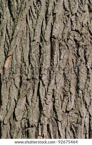 Close view of a bark of an old tree - stock photo
