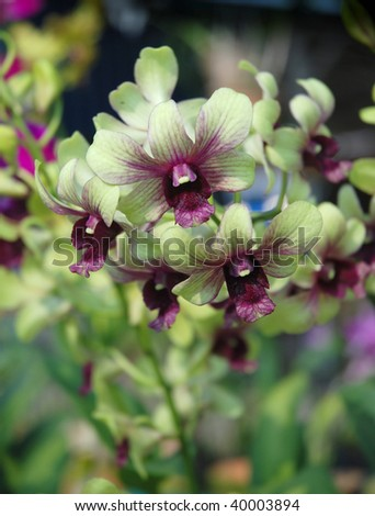 Close view of a beautiful Orchid flower - stock photo